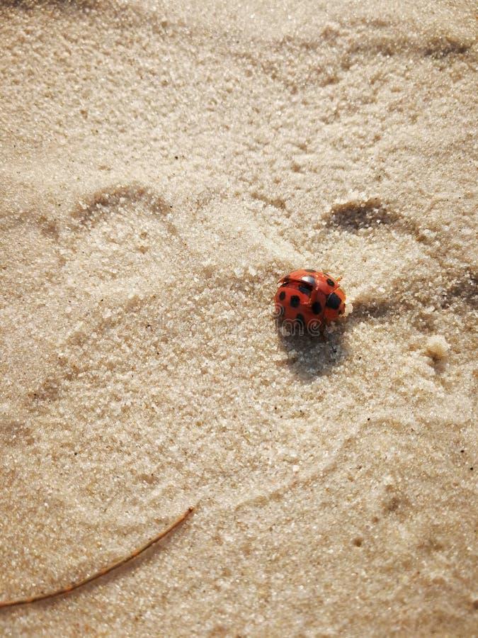 Voetafdruk in zand met rode lieveheersbeestjeclose-up royalty-vrije stock foto