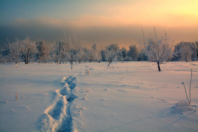 Voetafdrukken in de sneeuw stock afbeelding