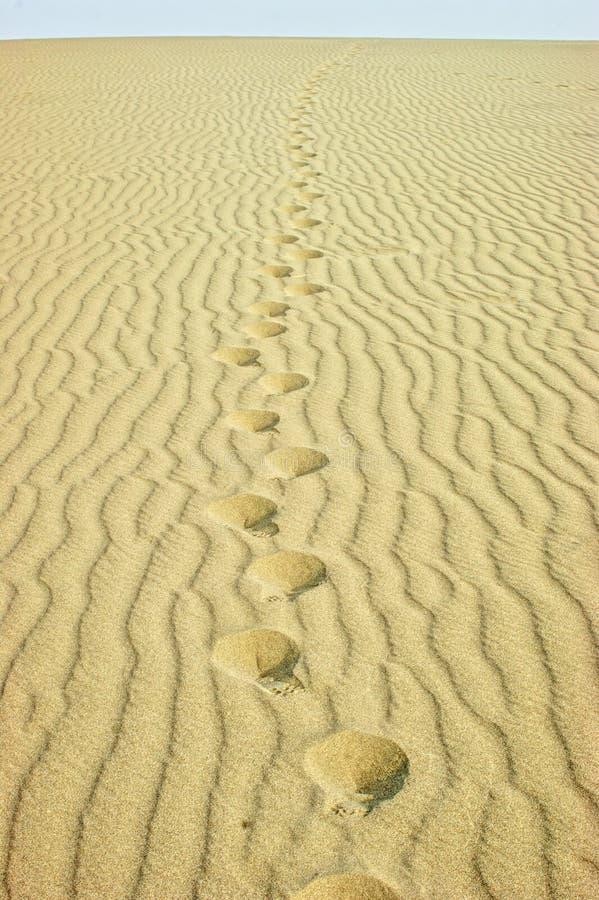 Voetafdrukken in de woestijn stock foto