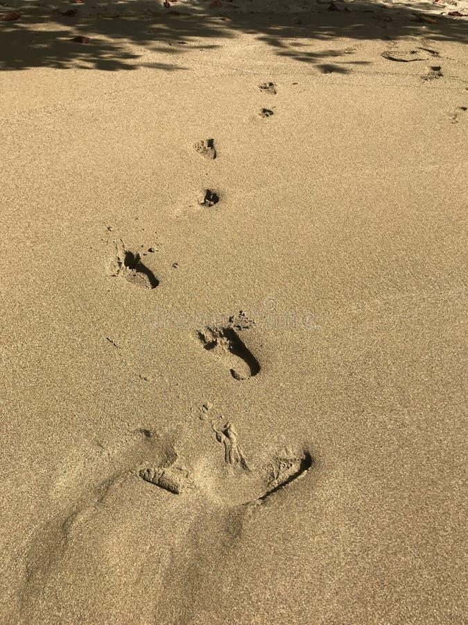 Voetafdrukken in het het Verschuiven Zand stock foto