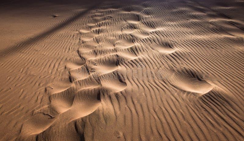 Voetafdrukken in het zandduin stock fotografie