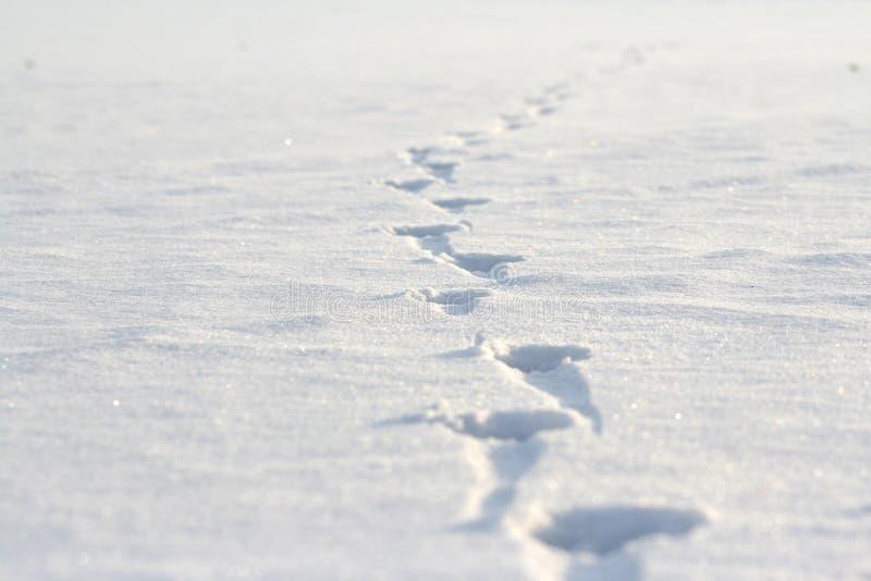 Voetafdrukken op de sneeuw royalty-vrije stock afbeeldingen