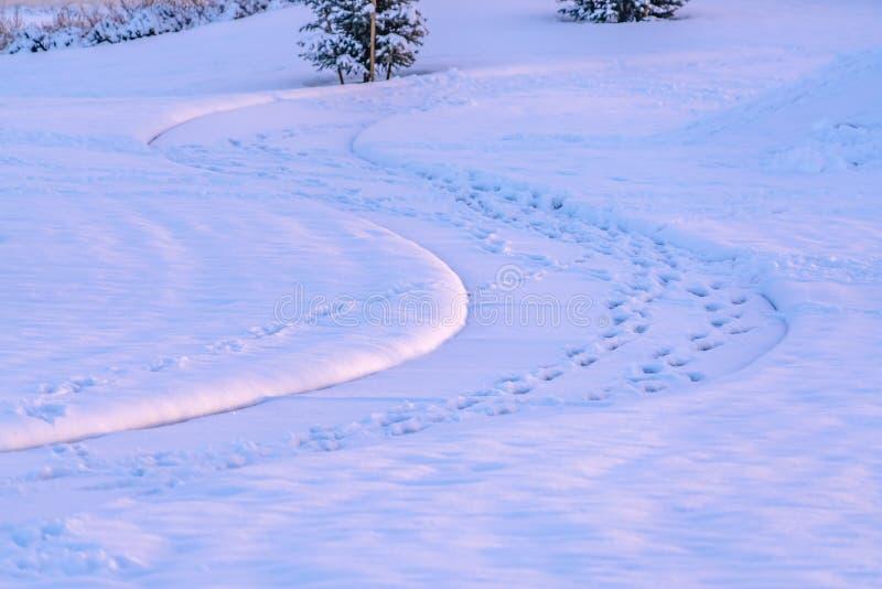 Voetafdrukken op een sneeuw behandelde weg in Eagle Mountain Utah worden gestempeld dat stock afbeeldingen