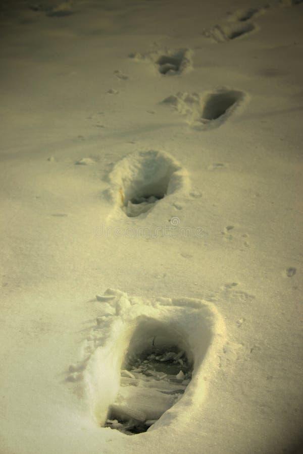 Voetafdrukken Op Sneeuw Stock Foto