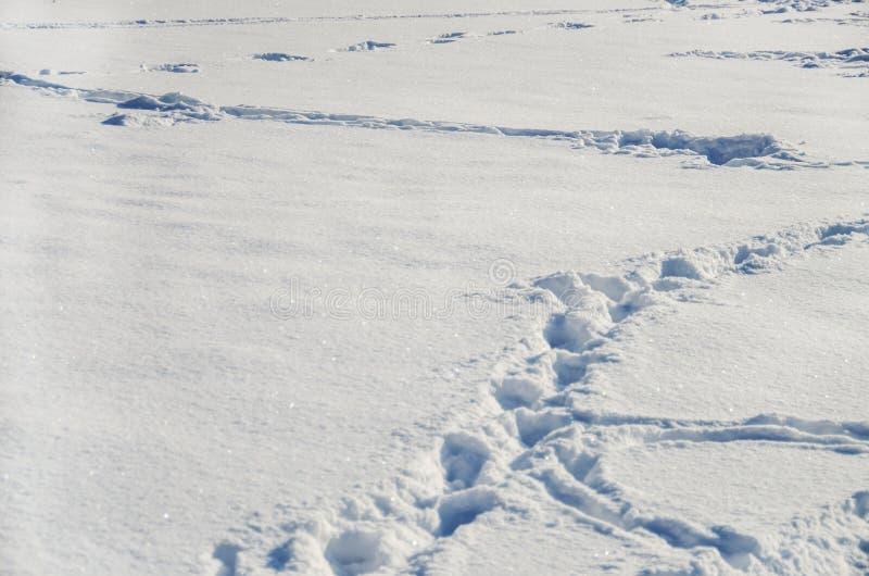 Voetafdrukken op witte sneeuw royalty-vrije stock foto