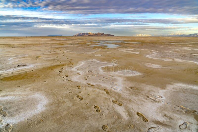 Voetafdrukken van een mens en een hond op de bruine zandige kust van een meer wordt gestempeld dat stock foto