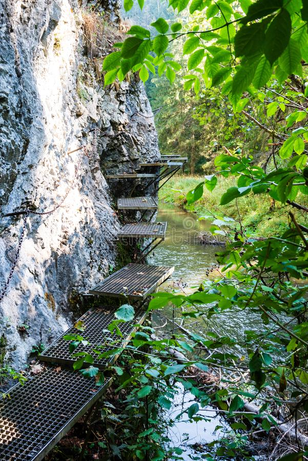 voetbrug over bosrivier in de zomer royalty-vrije stock afbeelding