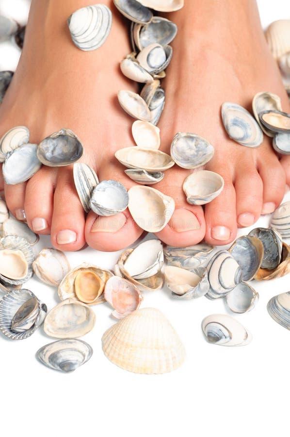 Voeten en overzeese shells, achtergrond stock fotografie
