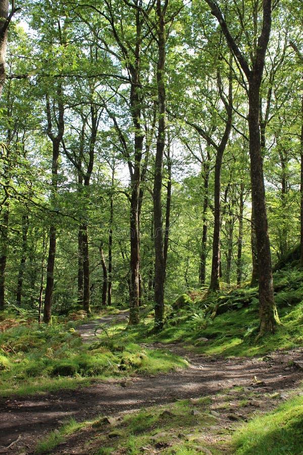 Voetpad door bosopen plek in Cumbria stock afbeeldingen