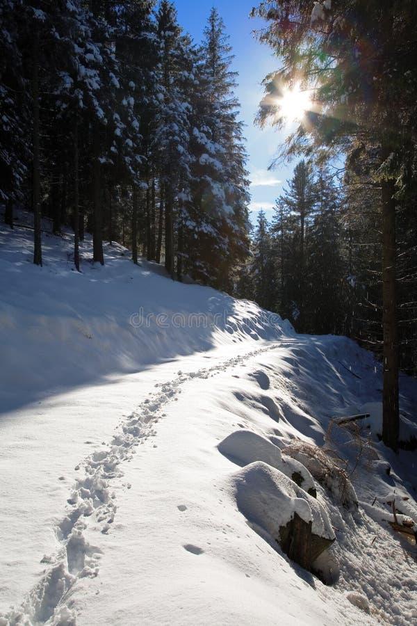 Voetpad in een sneeuwbos royalty-vrije stock foto's