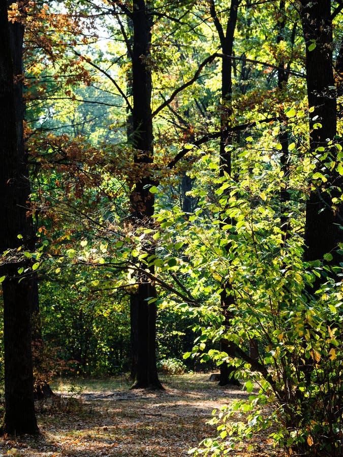Voetpad in eiken bosje in stedelijk park in de herfst royalty-vrije stock afbeeldingen