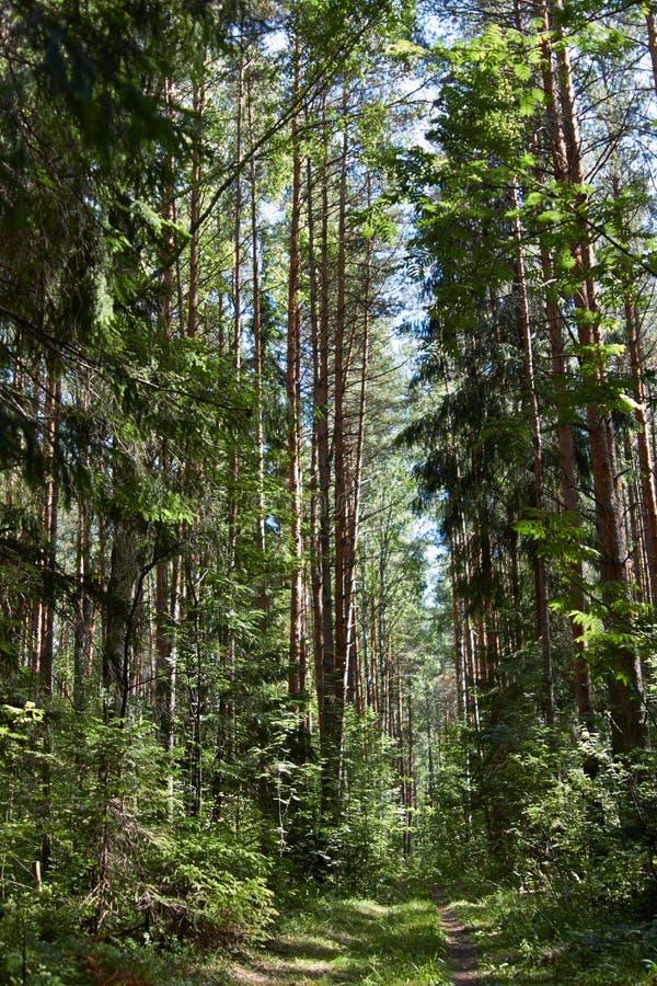 Voetpad in het bos stock afbeelding