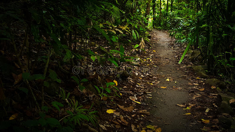 Voetpad in het bos stock afbeeldingen