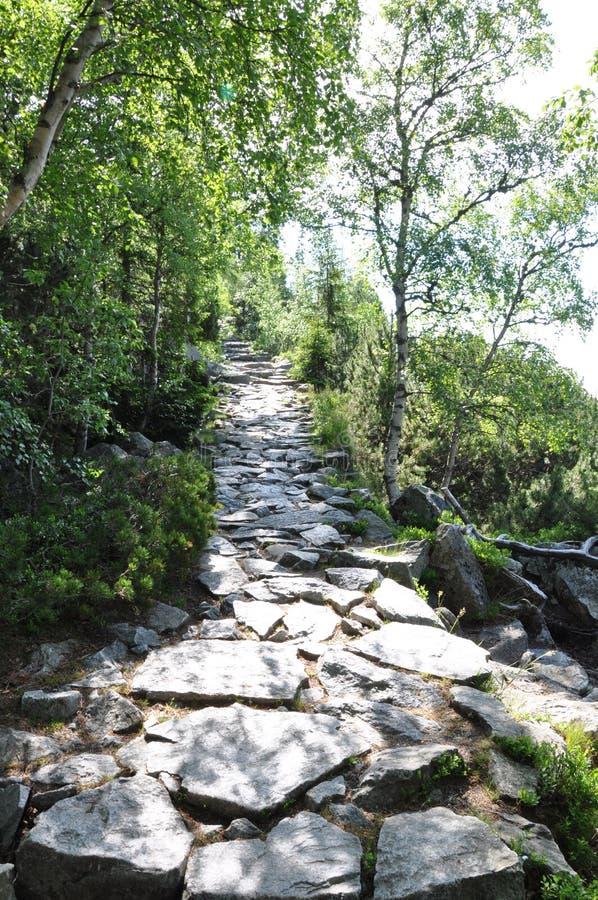 Voetpad in het bos in de berg stock afbeelding