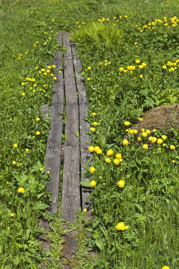 Voetpad met Globeflowers stock fotografie