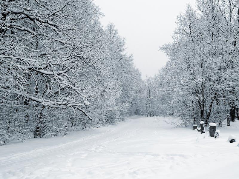 Voetpad in sneeuwhout royalty-vrije stock foto
