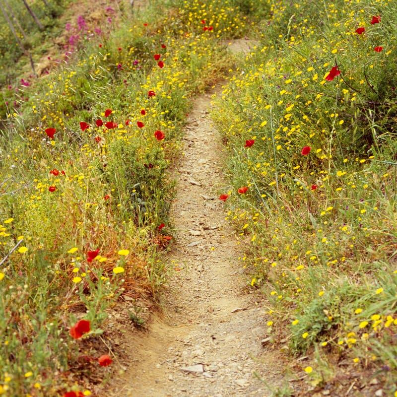 Voetpadweg wandeling het lopen sleep door landelijke plattelandswildflowers, Cinque Terre, Italië stock foto