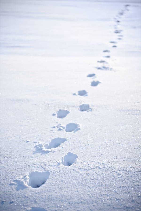 Voetstappen in de sneeuw royalty-vrije stock foto