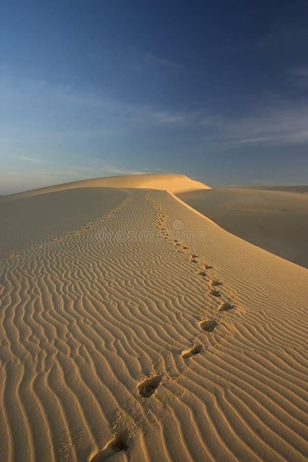 Voetstappen in de woestijn stock afbeeldingen