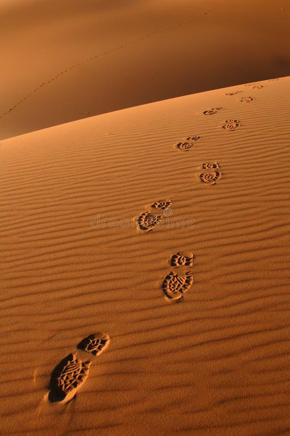 Voetstappen in de Woestijn van de Sahara stock afbeeldingen