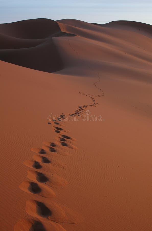 Voetstappen in de Woestijn van de Sahara stock afbeelding