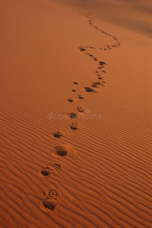 Voetstappen in de Woestijn van de Sahara stock fotografie