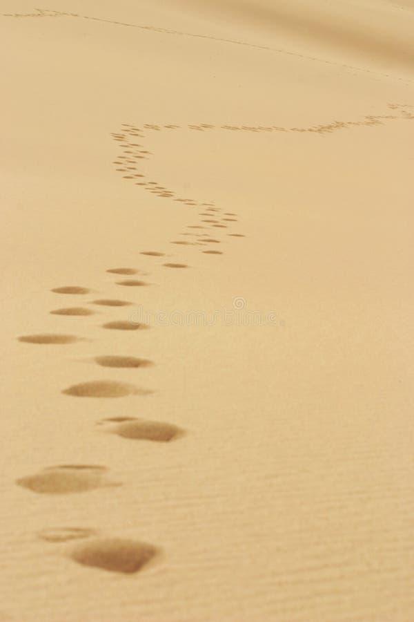 Voetstappen in het Zand stock foto's