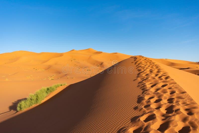 Voetstappen langs een Zandduin in Sahara Desert royalty-vrije stock foto