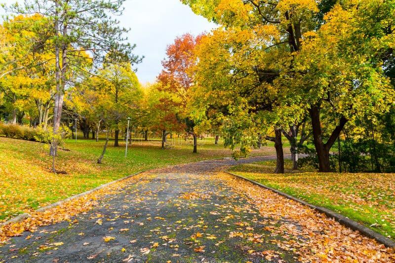 Voetweg in Canada in de herfst royalty-vrije stock afbeeldingen