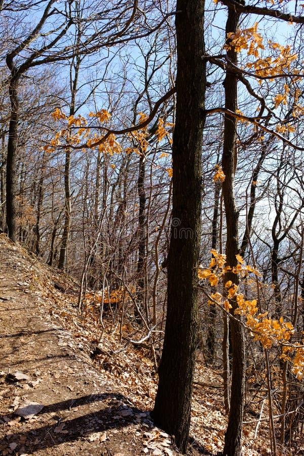 Voetweg in een bos royalty-vrije stock afbeelding