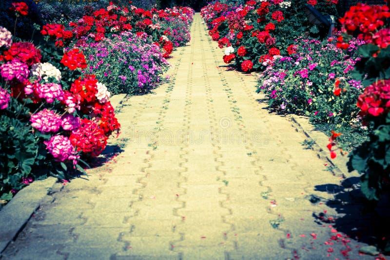 Voetweg in tuin. royalty-vrije stock afbeeldingen
