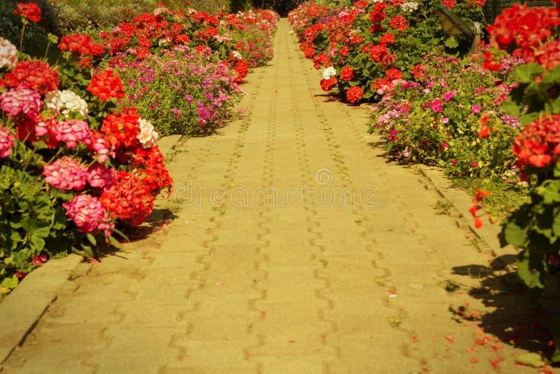 Voetweg in tuin, gefiltreerde wijnoogst royalty-vrije stock afbeeldingen