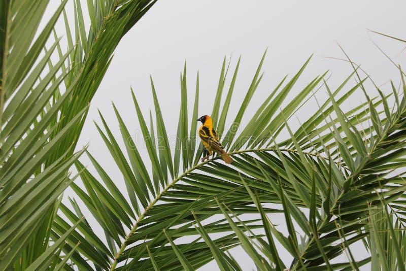 Vogel in Äthiopien lizenzfreies stockbild