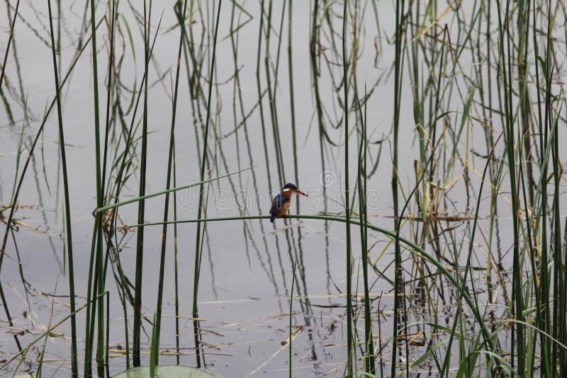 Vogel in Äthiopien lizenzfreie stockfotos