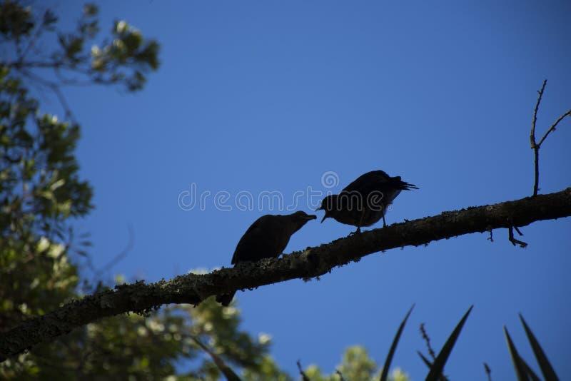 vogel stockbild