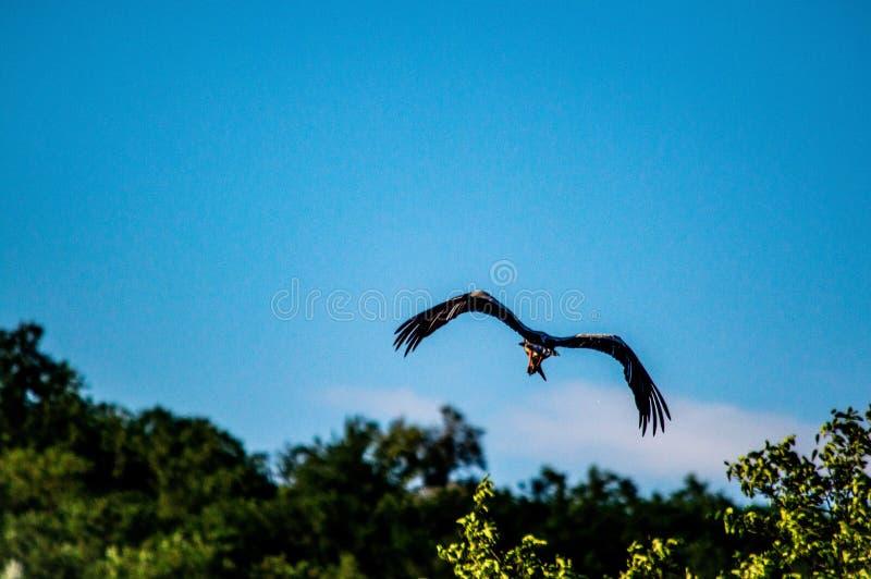 vogel lizenzfreie stockfotos