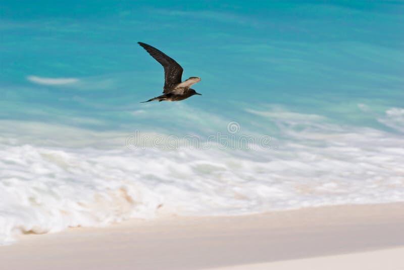 Vogel stock foto's