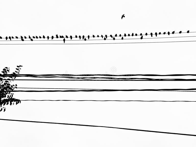 Vogel auf dem Draht in Toronto, Kanada stockfoto