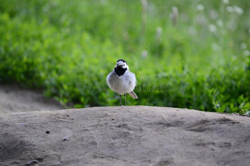 Vogel auf dem Hügel lizenzfreies stockbild