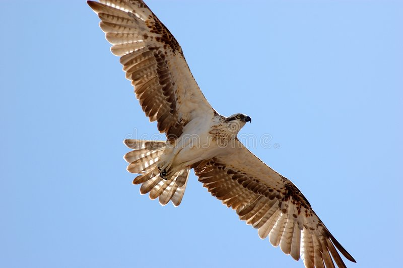 Vogel auf dem Himmel stockfotos