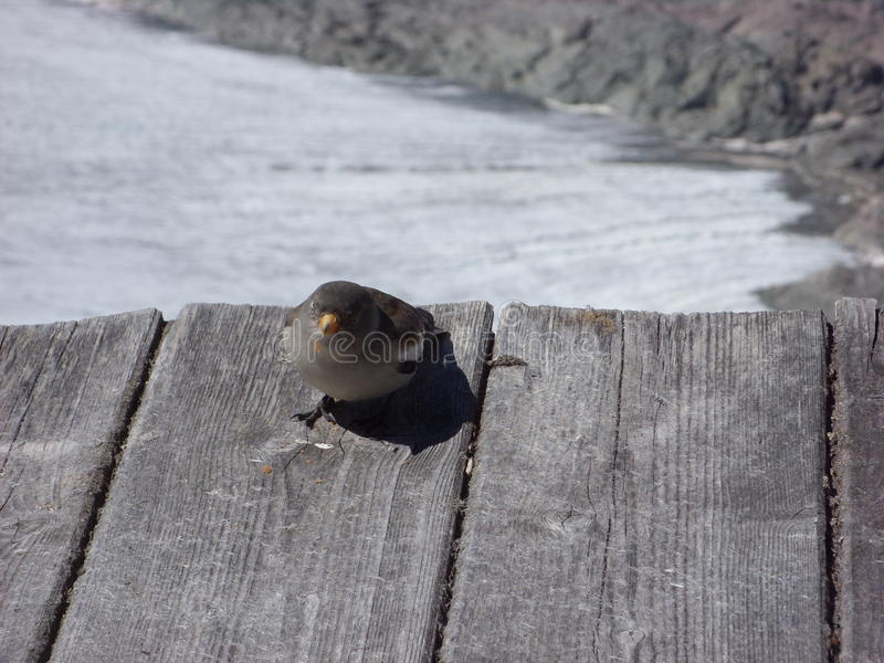 Vogel auf dem Schnee lizenzfreie stockfotos