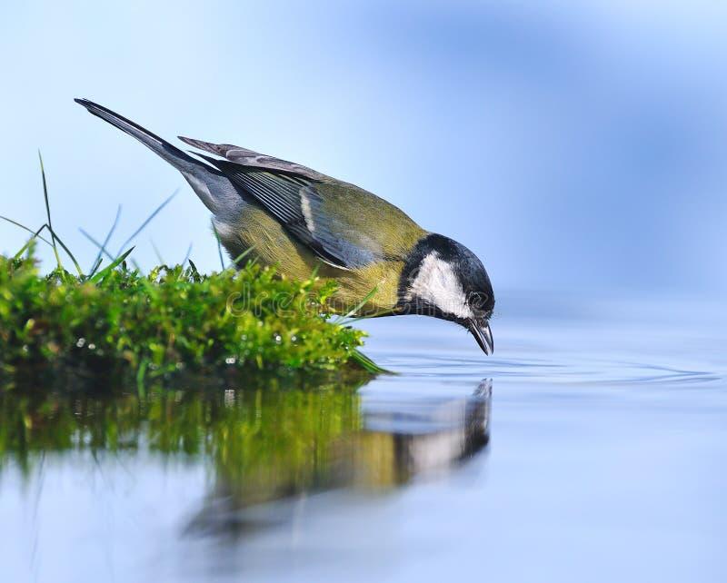 Vogel auf dem Wasser. lizenzfreie stockbilder