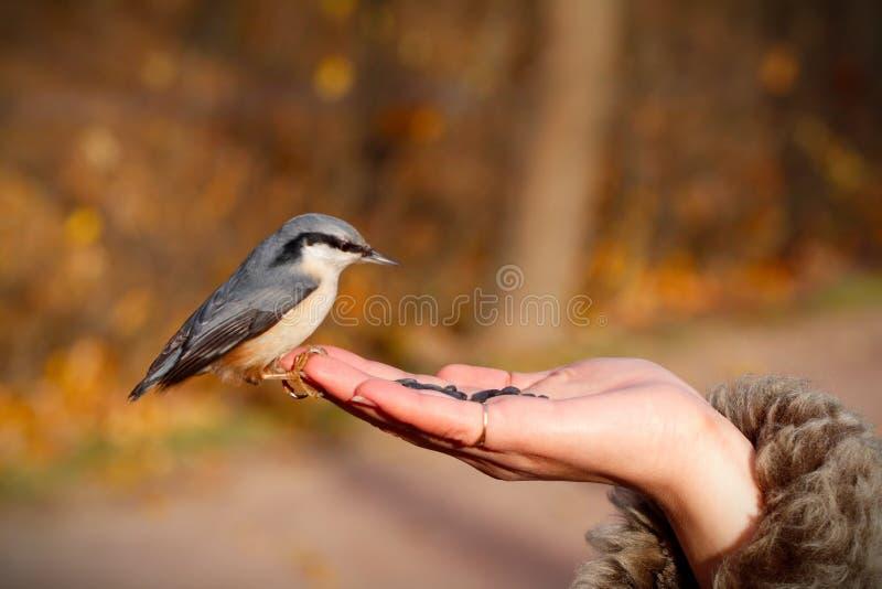 Vogel auf der Hand lizenzfreie stockfotografie