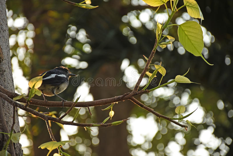 Vogel auf der Niederlassung stockfotos