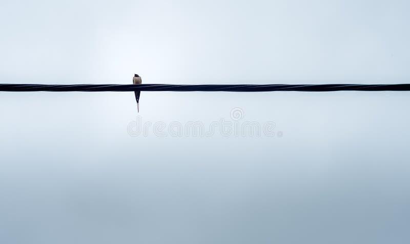 Vogel auf Draht lizenzfreies stockbild