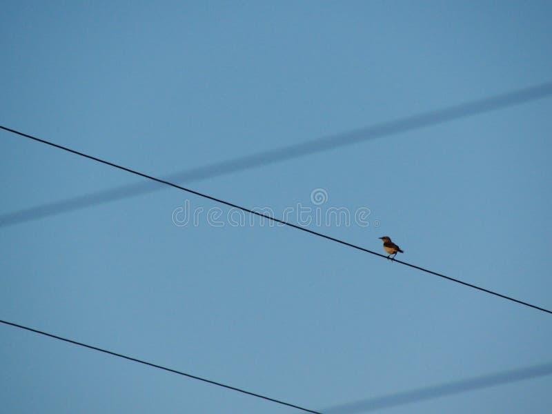 Vogel auf einem Draht lizenzfreie stockfotografie