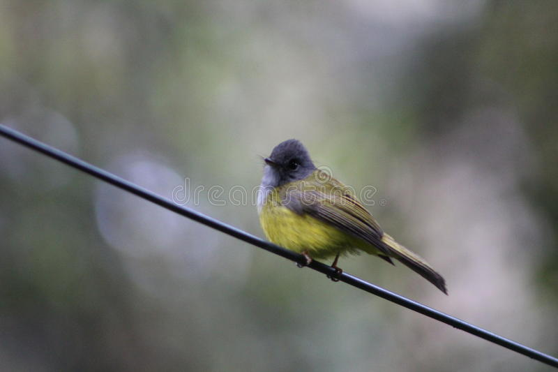 Vogel auf einem Draht lizenzfreie stockbilder