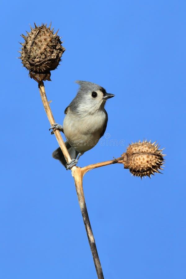 Vogel auf einem Steuerknüppel stockfotos