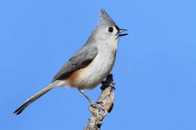 Vogel auf einem Steuerknüppel lizenzfreie stockfotos