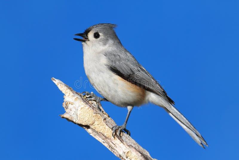 Vogel auf einem Steuerknüppel lizenzfreies stockbild